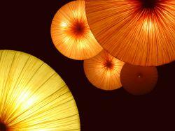 Narancsos sárgarépaleves